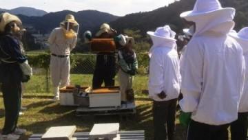 蜂の巣箱の観察体験