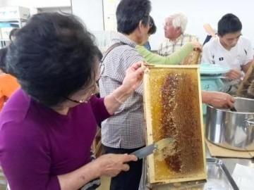 蜂蜜しぼり体験