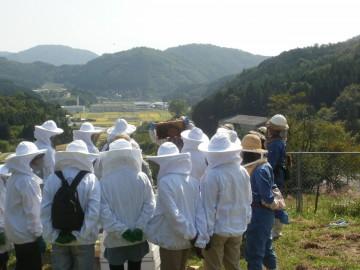 蜜蜂の巣箱の内検体験