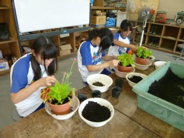 花作りの授業(寄せ植え)