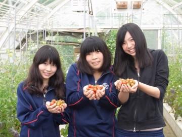 黄色いミニトマトも手の中に。もったいなくて・・・