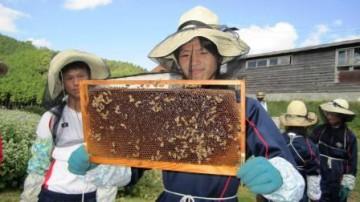 内検を行って貯蜜枠を抜き取っています