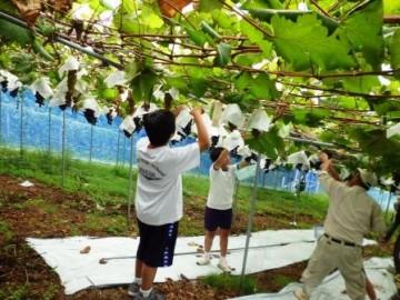 果樹づくり