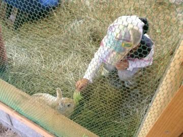 ウサギに触りました