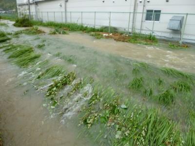 本校と大成化工との間にある川が増水