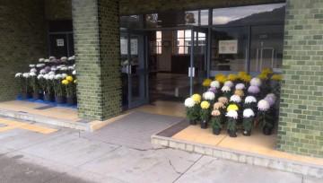 本校玄関前に飾られた菊