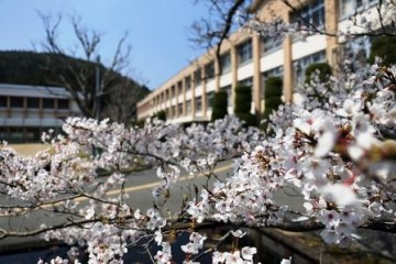 満開となった校庭の桜