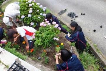 石垣に植え付ける様子