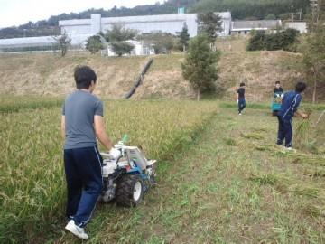 バインダーでの稲刈作業