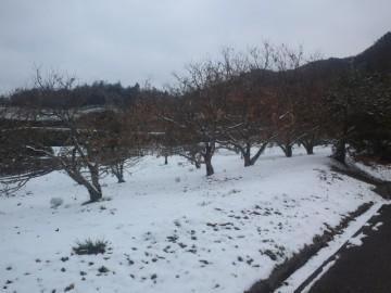 クリ林の雪景色