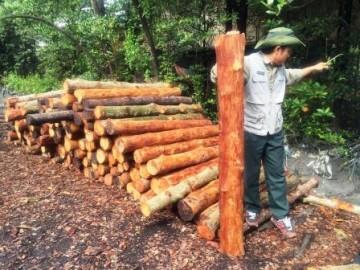 長さを調整し樹皮を剥し、窯に入れるマングローブ