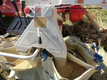 どんどん袋に入る籾(脱穀機)