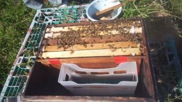 新しい巣枠を入れ、給餌された中の様子