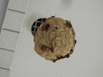 マーブル模様のきれいな巣